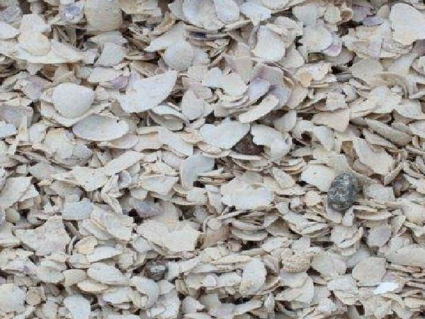 bulk crushed oyster shell Purchase guide