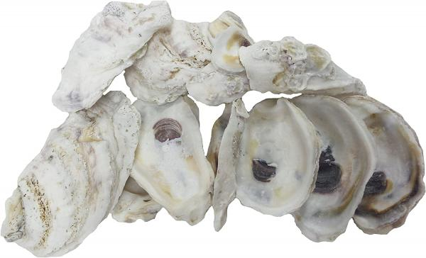What Is oyster shells?