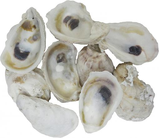Guide for buy oyster shells in bulk