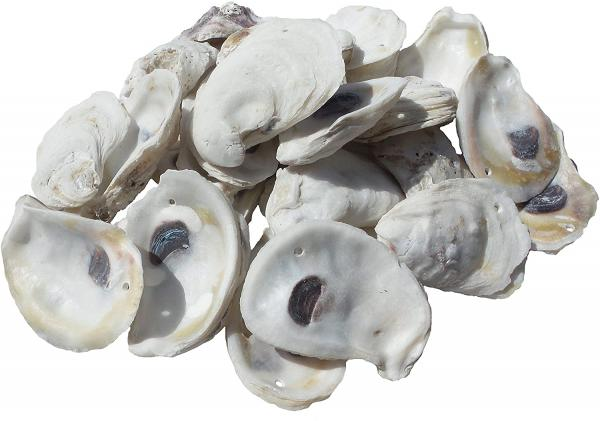 Who Buys oyster shells?